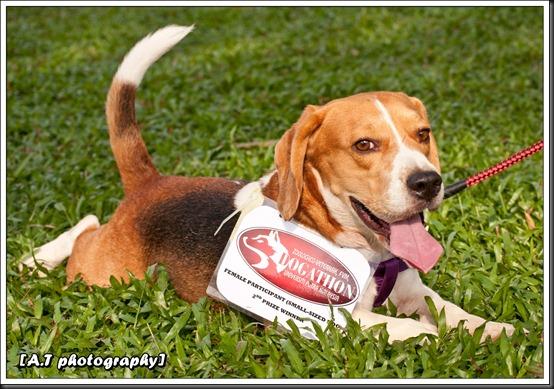 Beagle winner